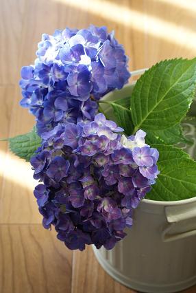 紫陽花 紫.jpg